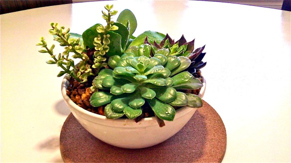 The real deal: Succulents